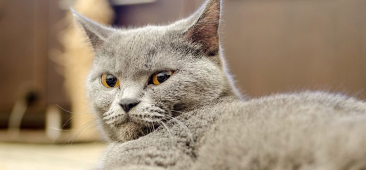О психологических границах. Тренируемся на кошках.